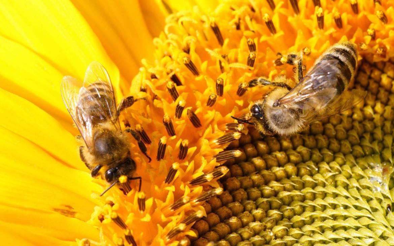 osy-i-pszczoly-na-kwiatach-3.jpg