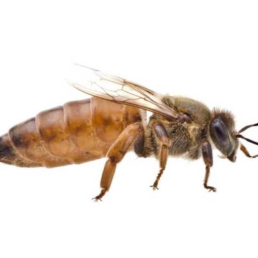 cropped-queen-bee.jpg
